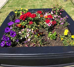 Barrhill in bloom planters